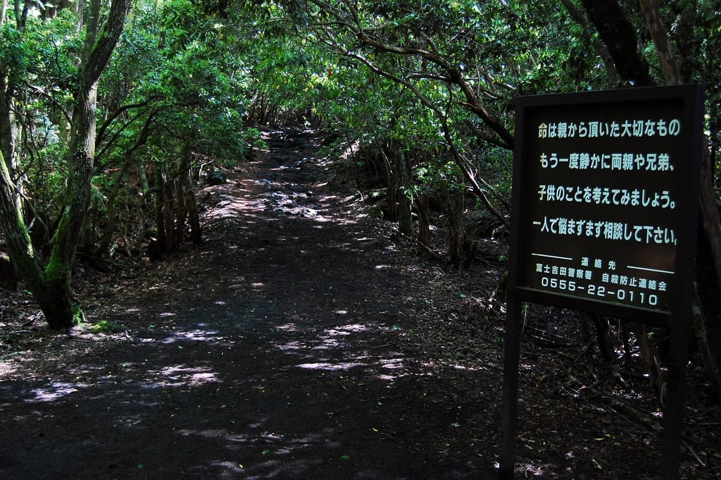 Aokigahara Pathway